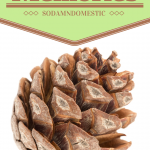 What does this pine cone have to do with memories? Read the important lesson it taught me.